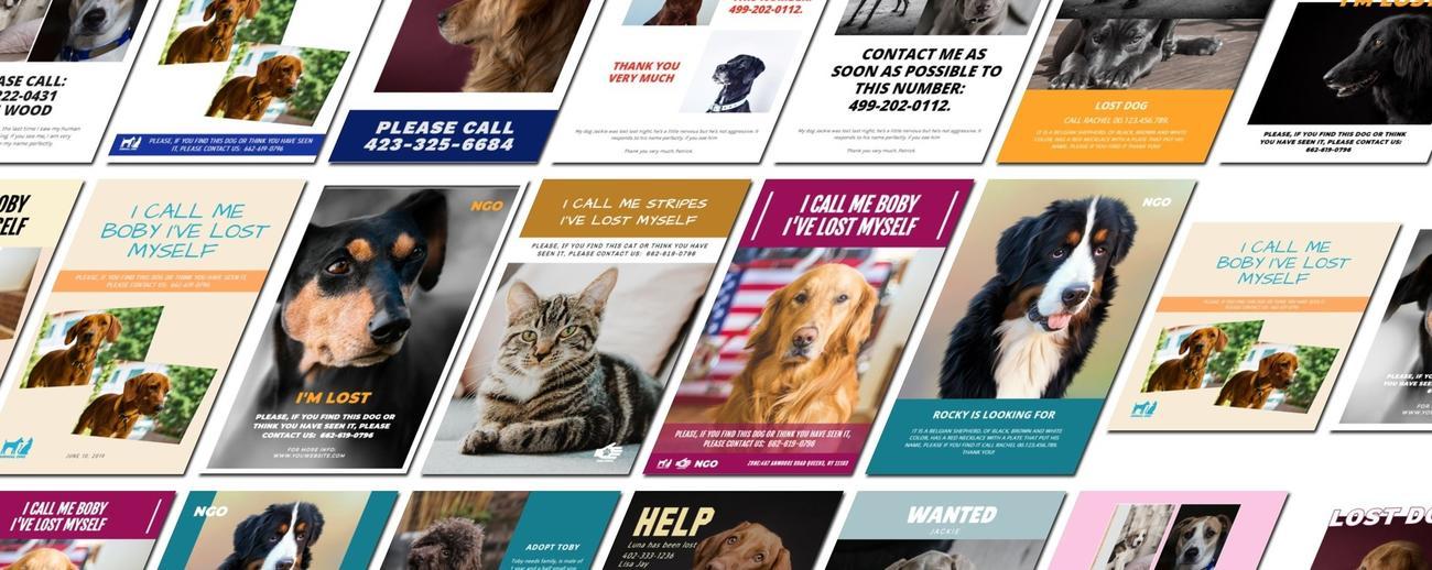 Crear cartel para tu mascota